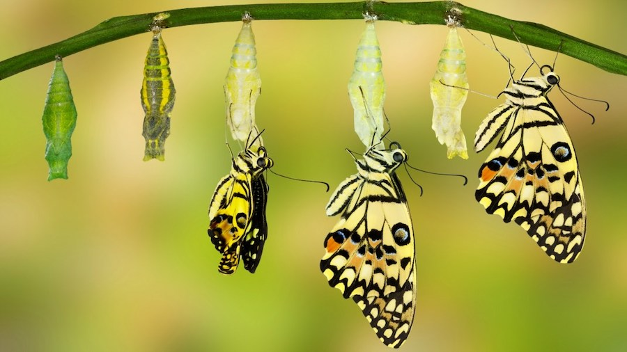 kundalini awakening article - butterflies