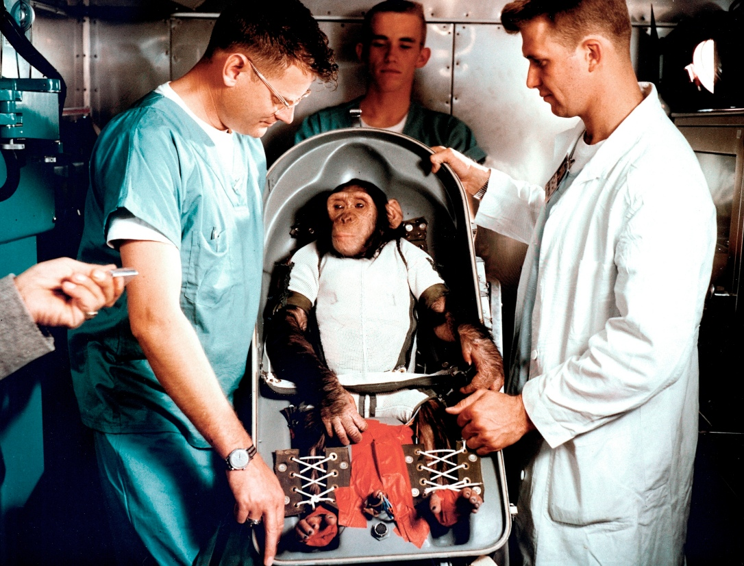 "CHIMPANZEE ""HAM"" IN FLIGHT COUCH FOR MR-2 (MERCURY-REDSTONE2) (REF# LOD 61C-114"