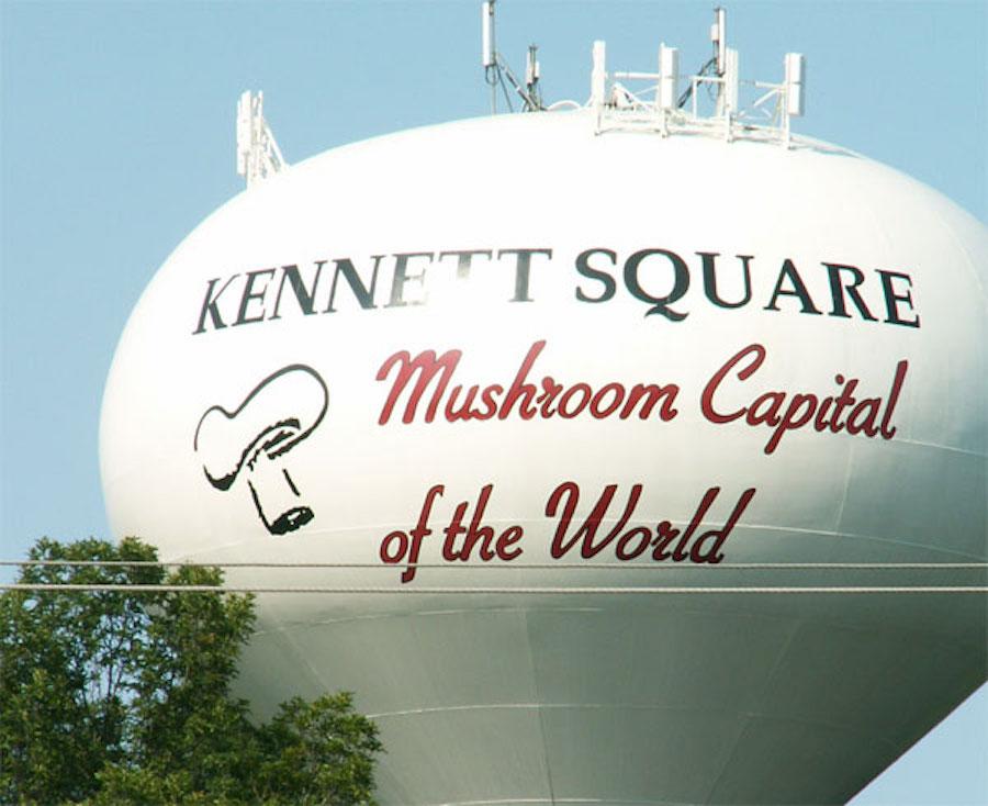 Kennett Mushroom