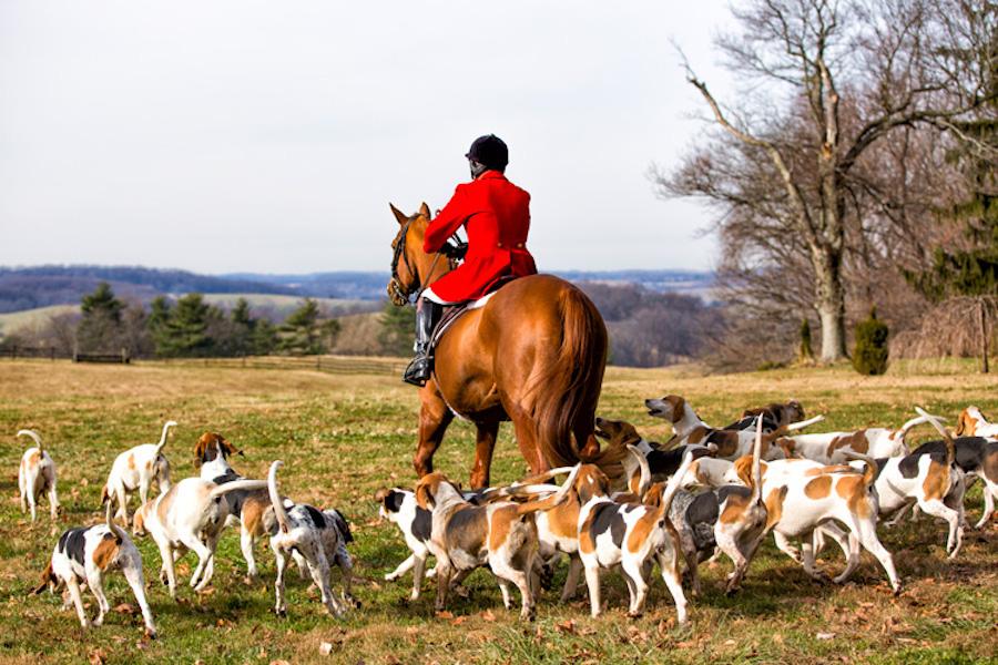 cheshire hounds
