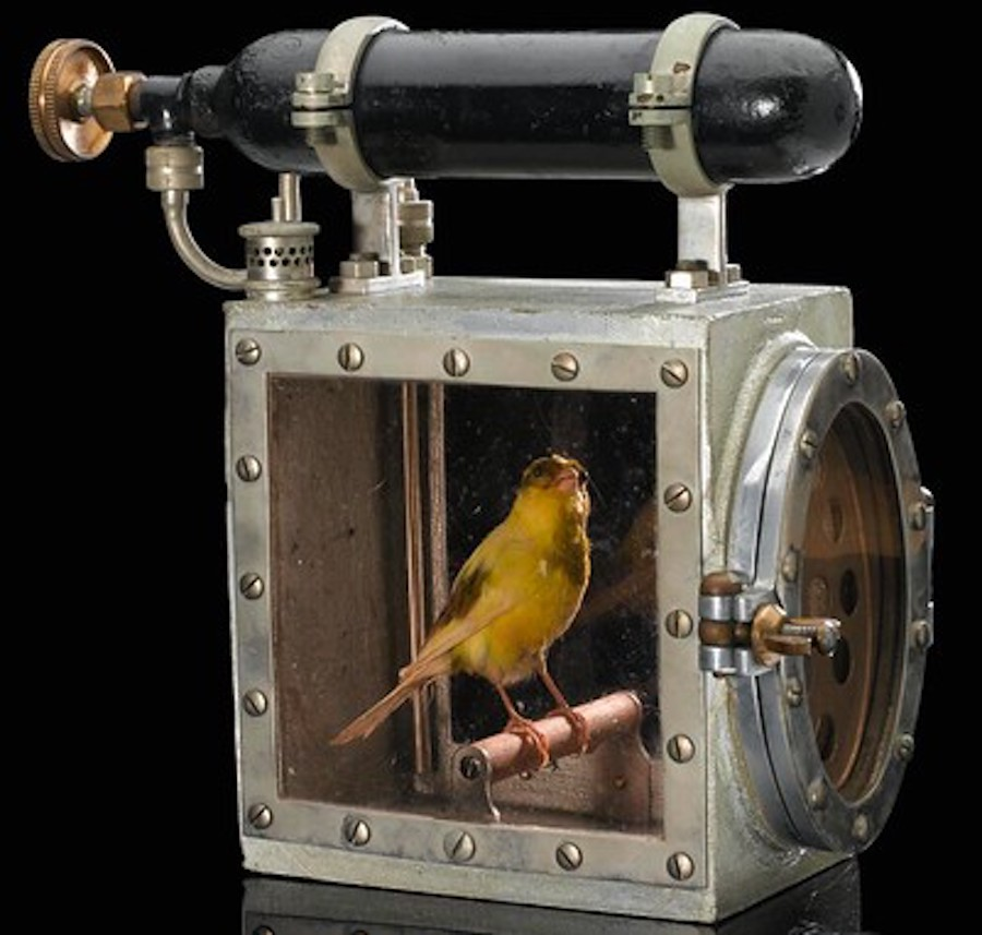 canary in a coalmine