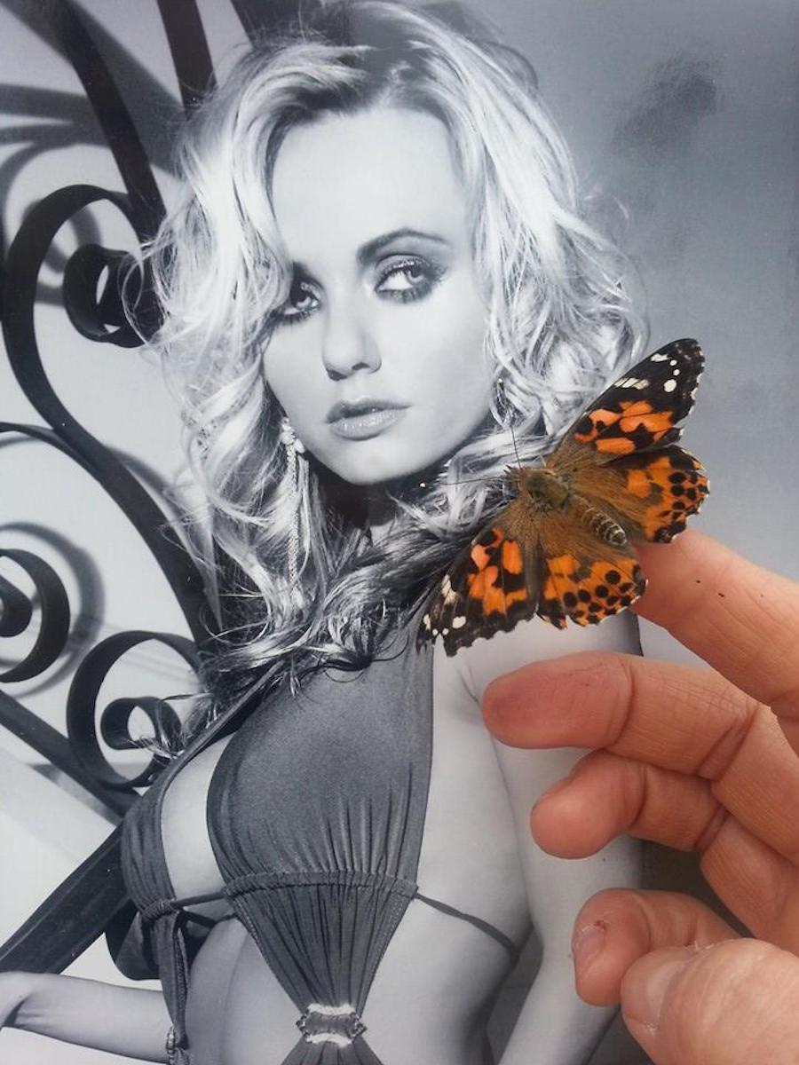 mcintaggart butterfly