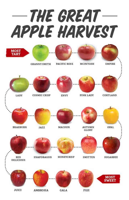 apples varietals