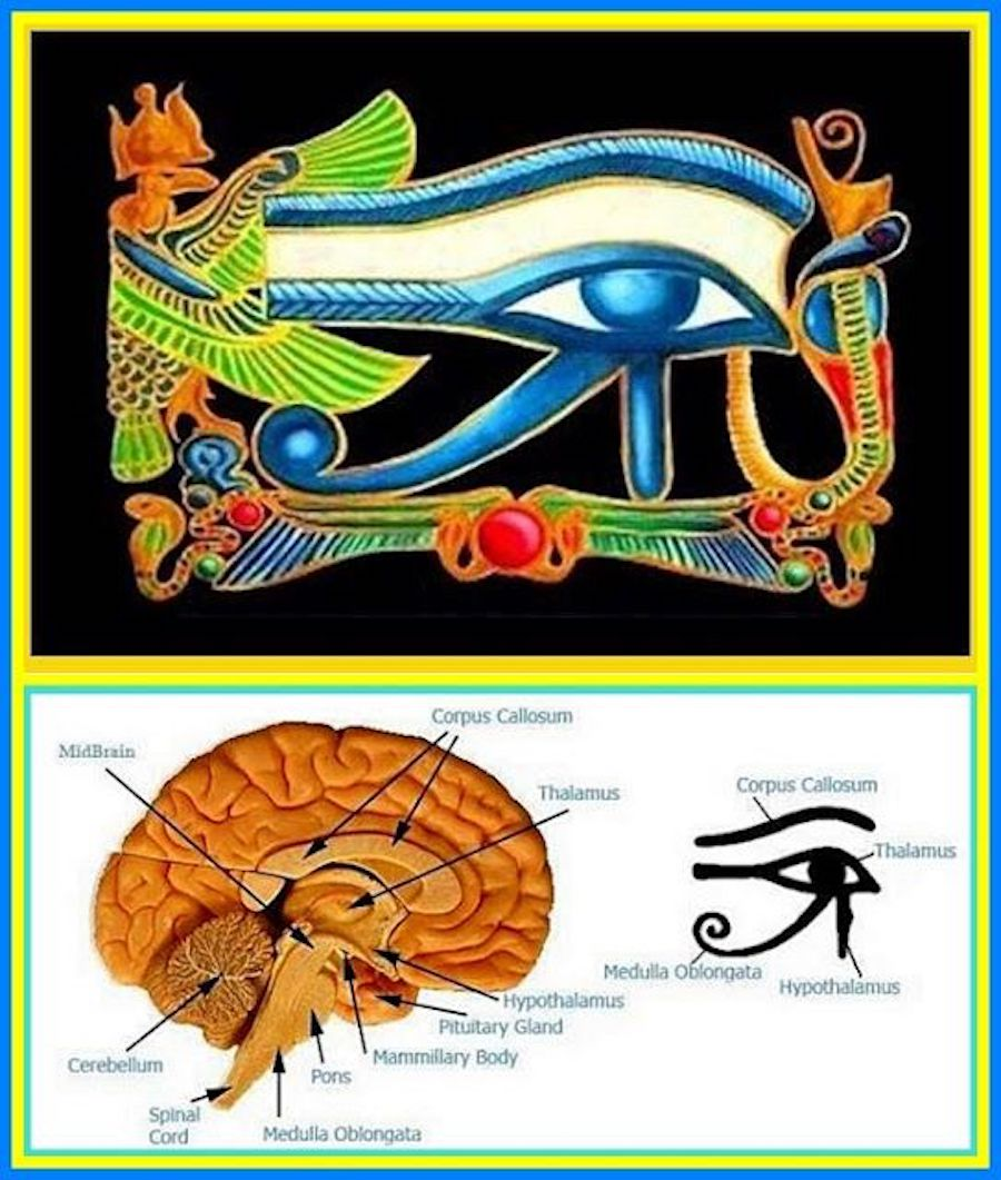eye of horus pineal gland