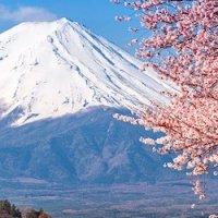 THE SECRET OF MOUNT FUJI